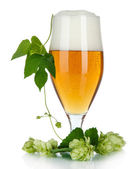 Glass of beer and hops, isolated on white — Stock Photo