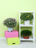 Flowers in pots with color boxes on shelves on wall background — Stock Photo