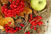 Red berries of viburnum with yellow leaves and apples on wicker stand on wooden background — Stock Photo