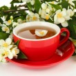 Cup of tea with jasmine, isolated on white — Stock Photo #33930231