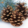 Beautiful pine cones isolated on white — Stock Photo