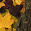 Beautiful autumn leaves with bark close up — Stock Photo