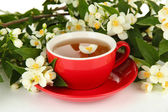 Cup of tea with jasmine, isolated on white — Stock Photo