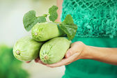 Woman hand holding raw zucchini, outdoors — Stock Photo