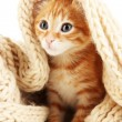 Cute little red kitten in scarf isolated on white — Stock Photo