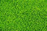 グリーン カーペットのテクスチャ — ストック写真