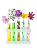 Flowers in test-tubes isolated on white — Stock Photo