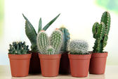 Collection of cactuses on wooden table — Stock Photo