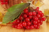 Red berries of viburnum with basket and yellow leaves on wooden background — Stock Photo