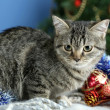 Cat in celebratory tinsel on Christmas tree background — ストック写真