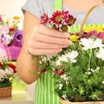 Florist makes flowers bouquet in wicker basket — Stock Photo #34112153