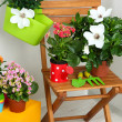 Many beautiful flowers on chair in room close-up — Stock Photo #34113005