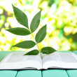 Book with plant — Stock Photo #34113043
