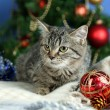 Cat in celebratory tinsel on Christmas tree background — Stock Photo #34115209
