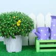 Chrysanthemum bush in pot with watering cans — Stock Photo #34115533