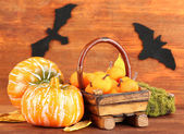 Halloween composition on brown wooden background — Stock Photo