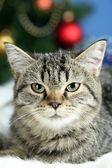 Cat on plaid on Christmas tree background — Stock Photo