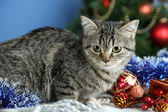 Cat in celebratory tinsel on Christmas tree background — Stock Photo