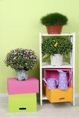 Flores en macetas con cajas de color en los estantes en el fondo de la pared — Foto de Stock