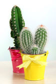 Cactuses in bright pails — Stock Photo