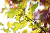 Hojas de color verde sobre fondo brillante — Foto de Stock