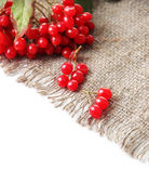 Red berries of viburnum on sackcloth napkin, isolated on white — 图库照片
