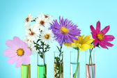 Flowers in test-tubes on light blue background — Stok fotoğraf