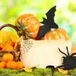 Halloween composition on nature background — Photo