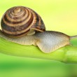 Snail crawling on green stem of plant on bright background — Stock Photo