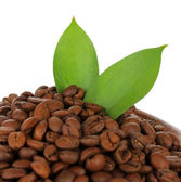 Coffee beans with leafs isolated on white — Stock Photo