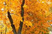 Beautiful autumn background — Stock Photo