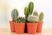 Collection of cactuses, on wooden windowsill — Stock Photo