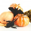 Halloween composition, isolated on white — Foto de Stock