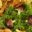 Mushrooms on grass background — Stock Photo