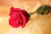 Mooie roos op kleur weefsel achtergrond — Stockfoto