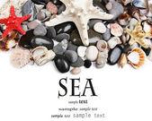 海石头和贝壳的关门 — 图库照片