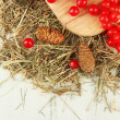 Stock Photo: Red berries of viburnum on stand with hay and bumps on wooden background