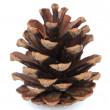 Beautiful pine cone isolated on white — Stock Photo