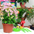 Many beautiful flowers in pots in room close-up — Stock Photo