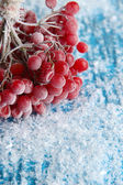 Red berries of viburnum with ice crystals, on blue background — Stock Photo
