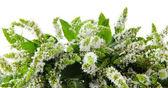 Fresh mint flowers isolated on white — Stock Photo