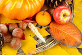 Beautiful autumn composition, close up — Stock fotografie