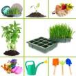 Collage of gardening theme — Stock Photo