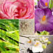 Beautiful nature collage — Stock Photo