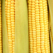 Stock Photo: Crude corns close-up