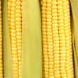 Crude corns close-up — Stock Photo