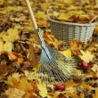 Cleaning of autumn leaves in park — Stock Photo #34636957