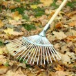 Cleaning of autumn leaves on green lawn — Stock Photo #34636969