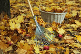 Cleaning of autumn leaves in park — Stock Photo