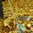 Cleaning of autumn leaves in park — Stock Photo #34822303